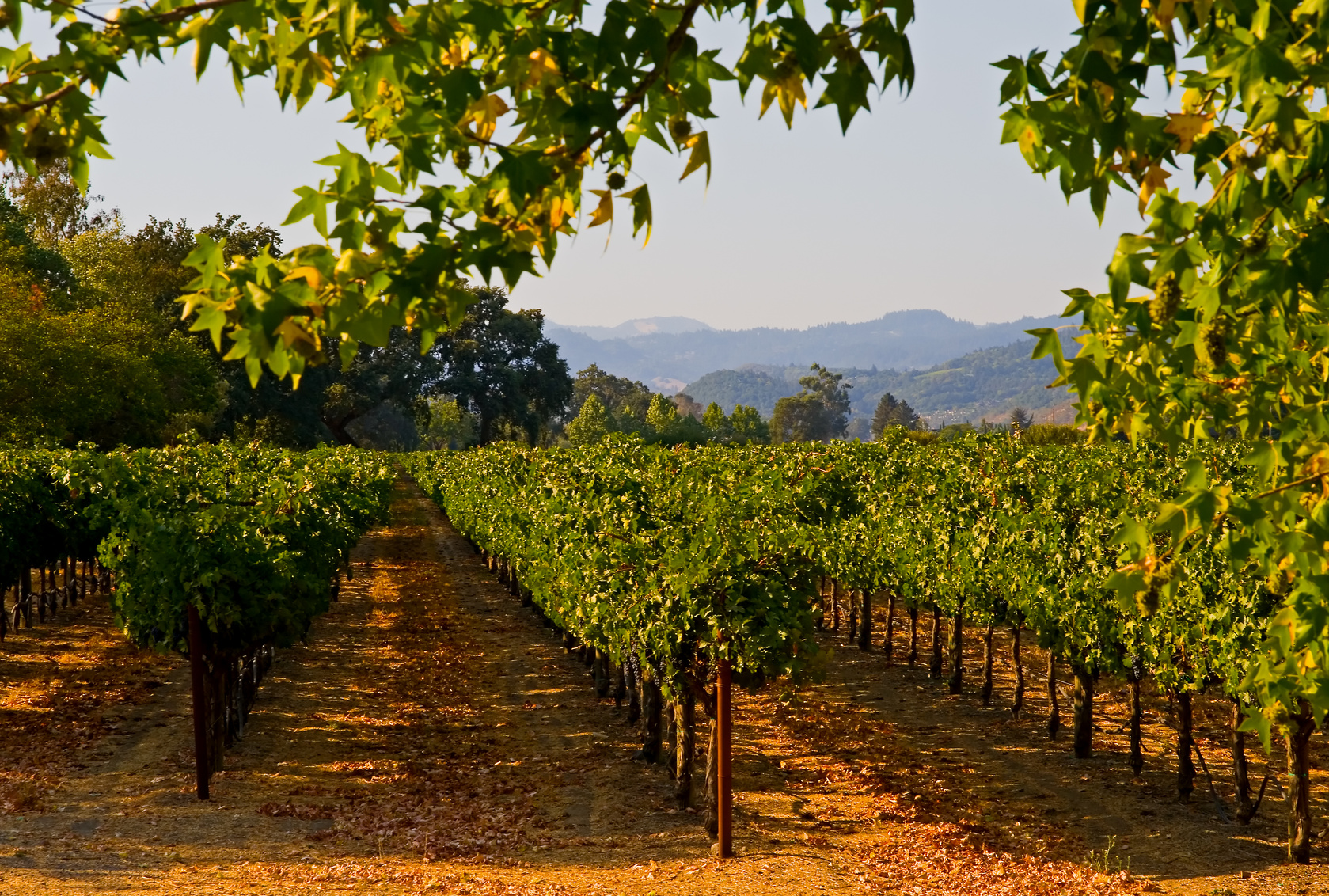 Sonoma Valley The Ideal Wine Country Destination